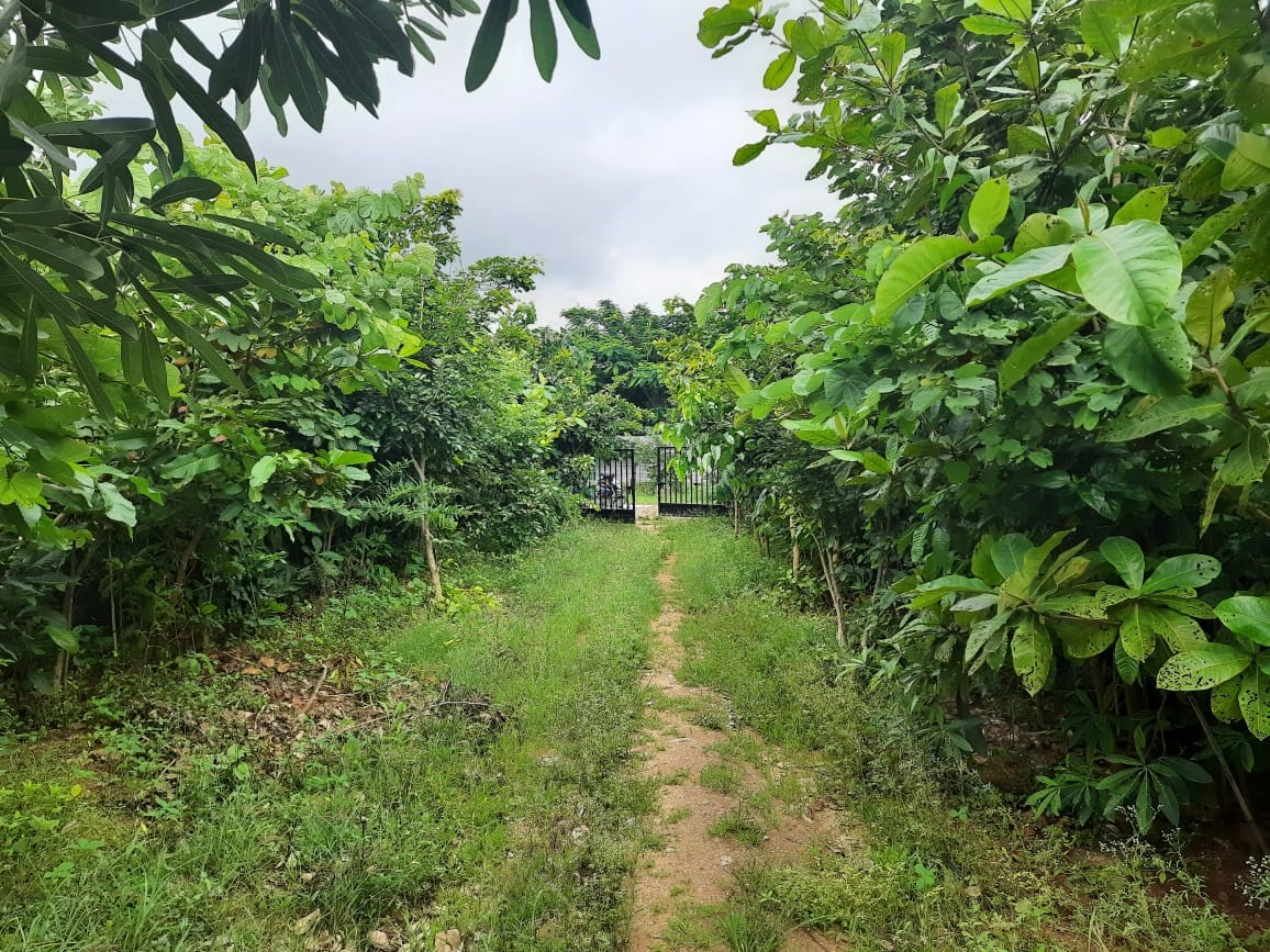 HYD plantation 14 07 21